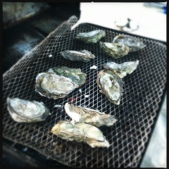 Hog Island Oysters on the grill